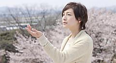 130305_sakura_main